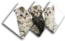 Kittens Cats Pets Animals - 13-1042(00B)-MP19-LO